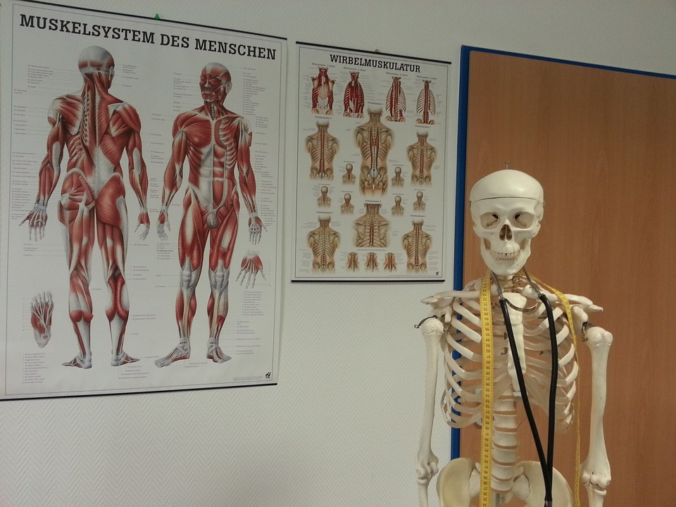 teaching-skeleton-being-used-to-teach-a-kinesiology-class